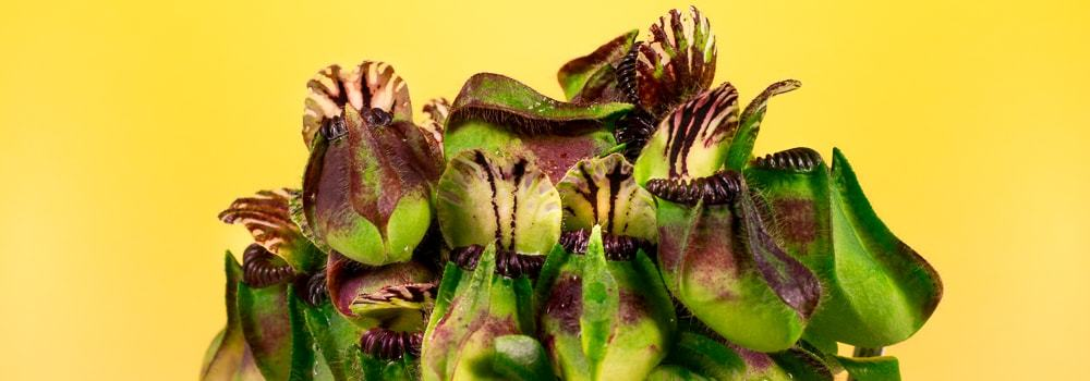 Carnivorous Plants - How to growing and care Carnivorous Plants